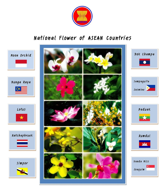 911 National Flower Series Archives Guai Shu Shu