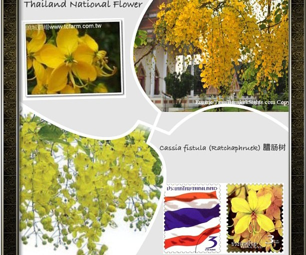 National Flower Series - South East Asia 9- Thailand