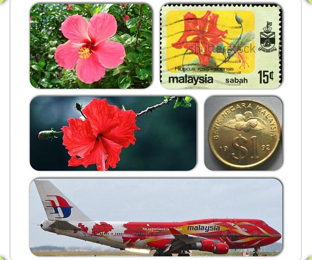 National Flower Series - South East Asia 2- Malaysia