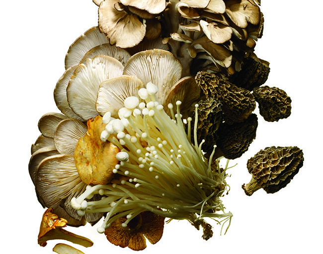 Mushroom Related Recipes - Reblog