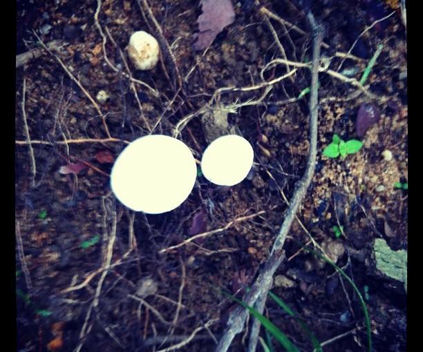Fungi Found in BRP 1