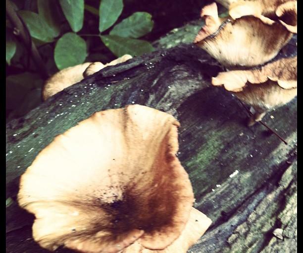 Fungi found in BRP-4