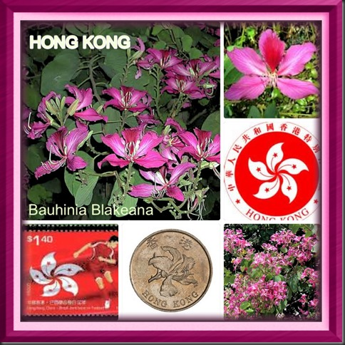The Beautiful Hong Kong Orchid Trees ….. 2